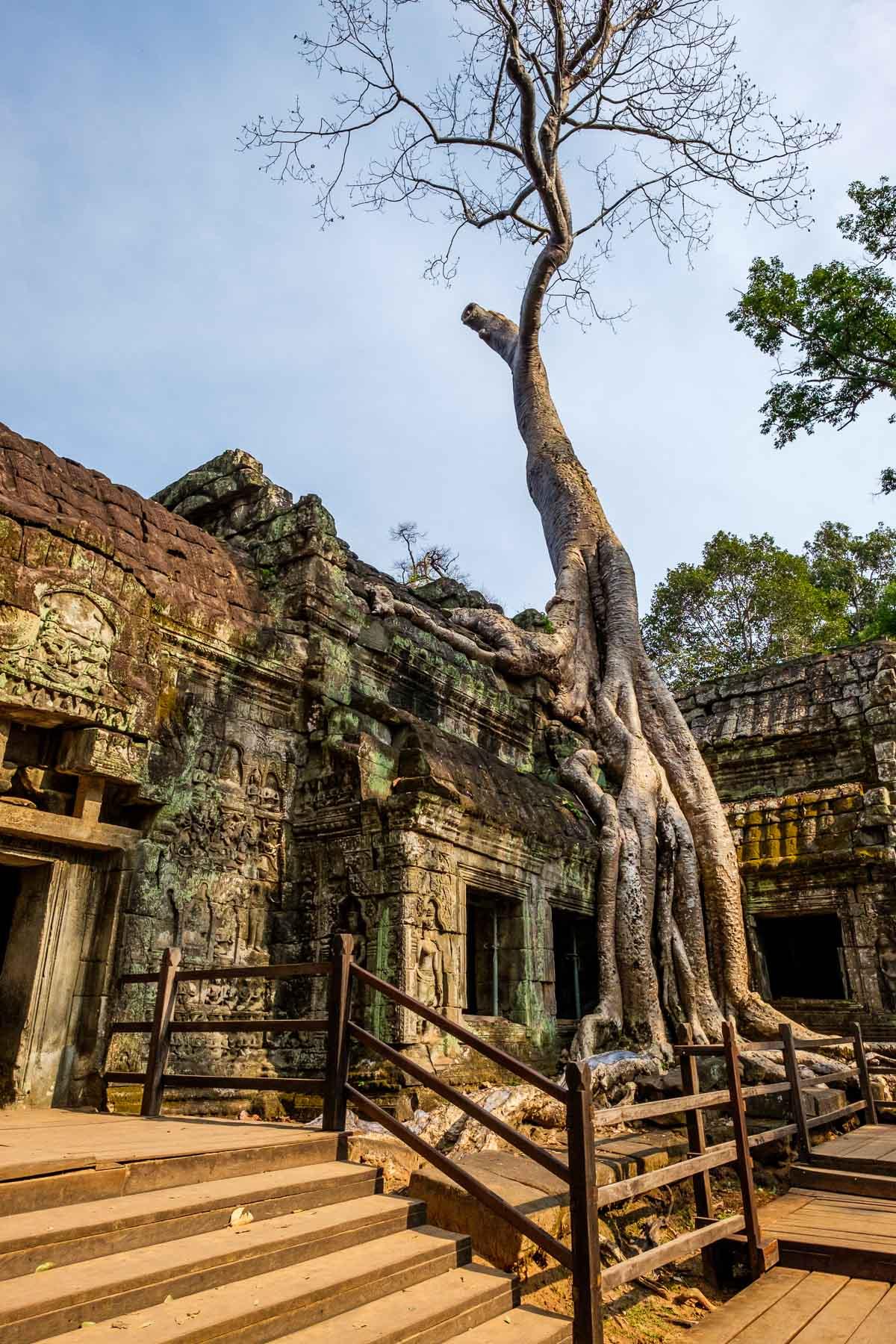 Angkor Ta Prohm Temple Cambodia