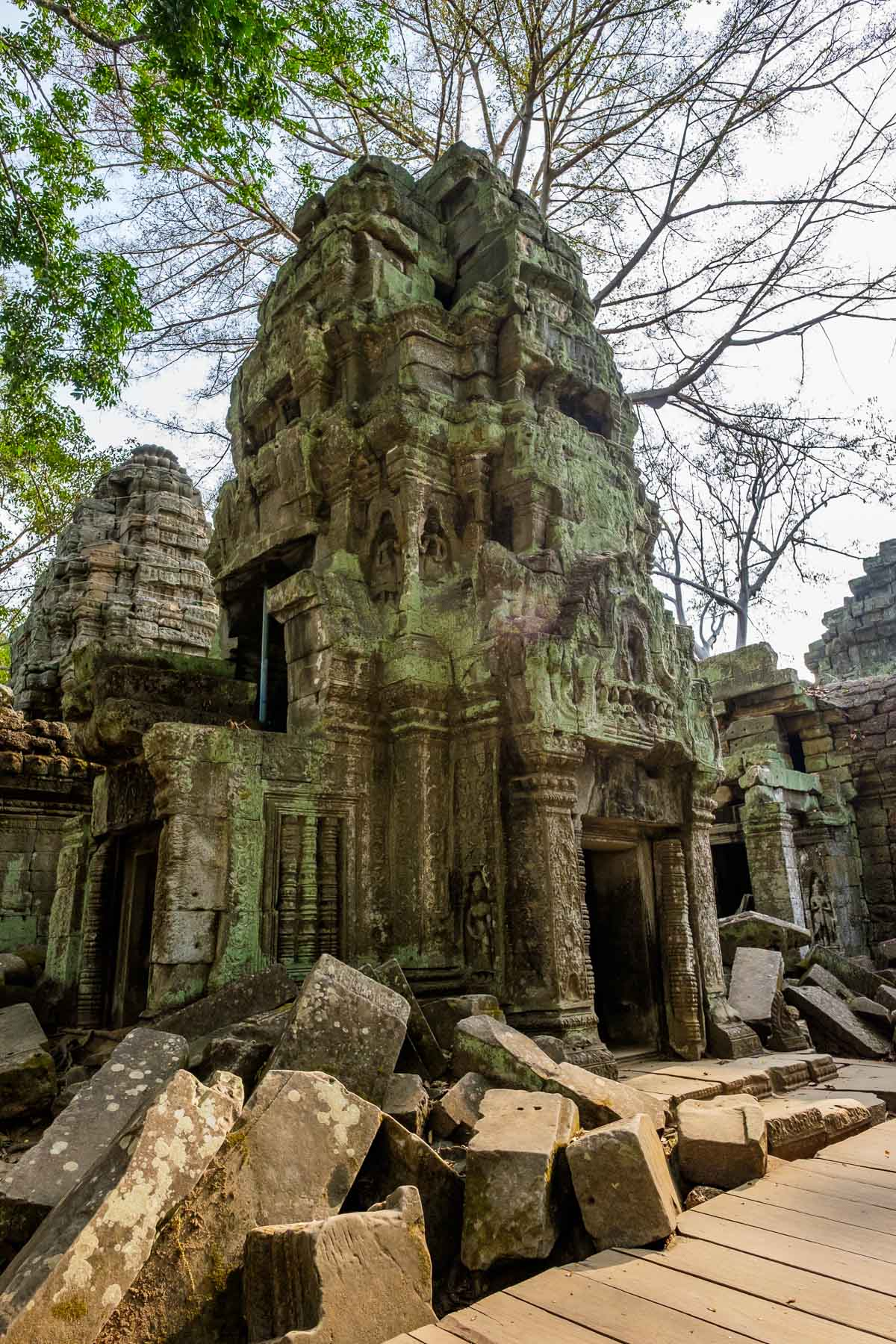 Angkor thom tower against tree