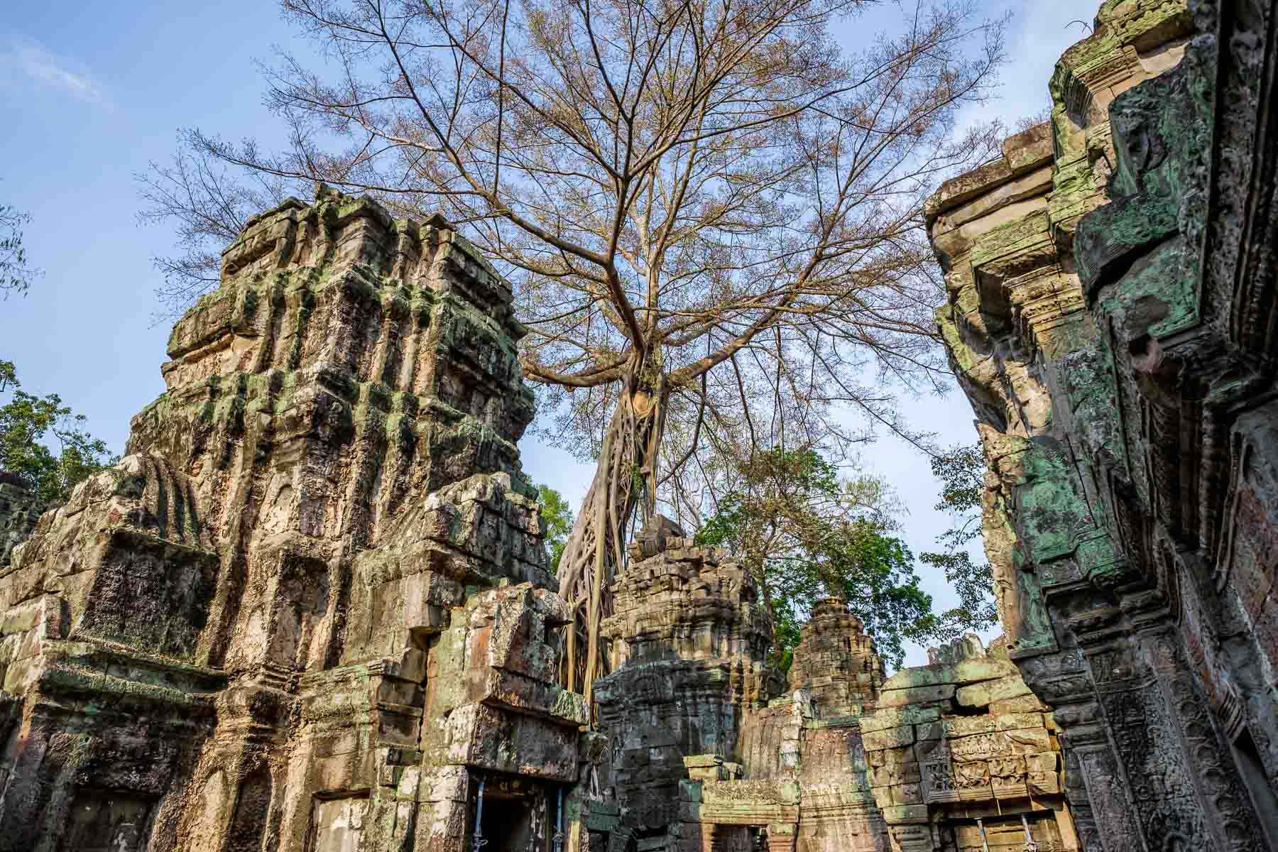 Angkor thom trees and structure