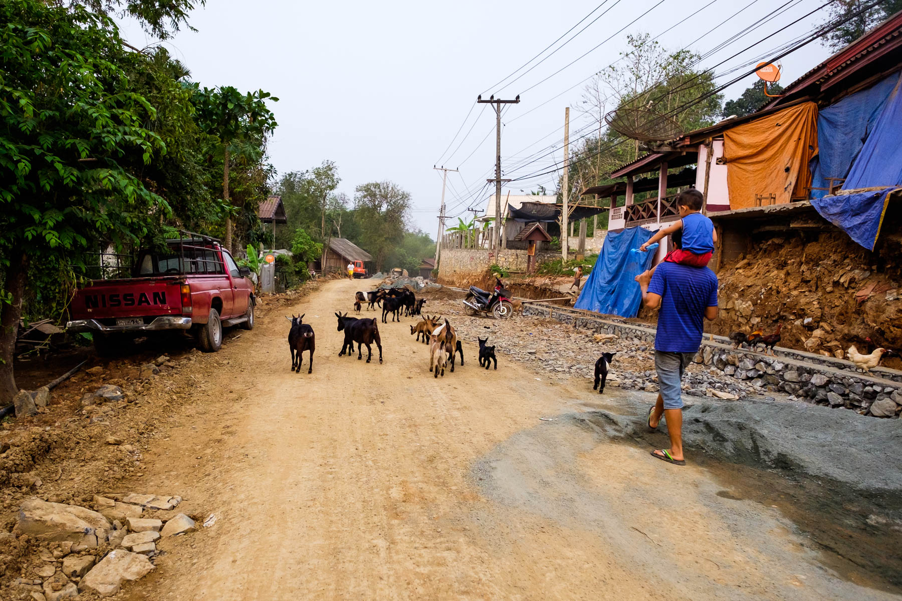 People walking and goats Ban Xang Khong village