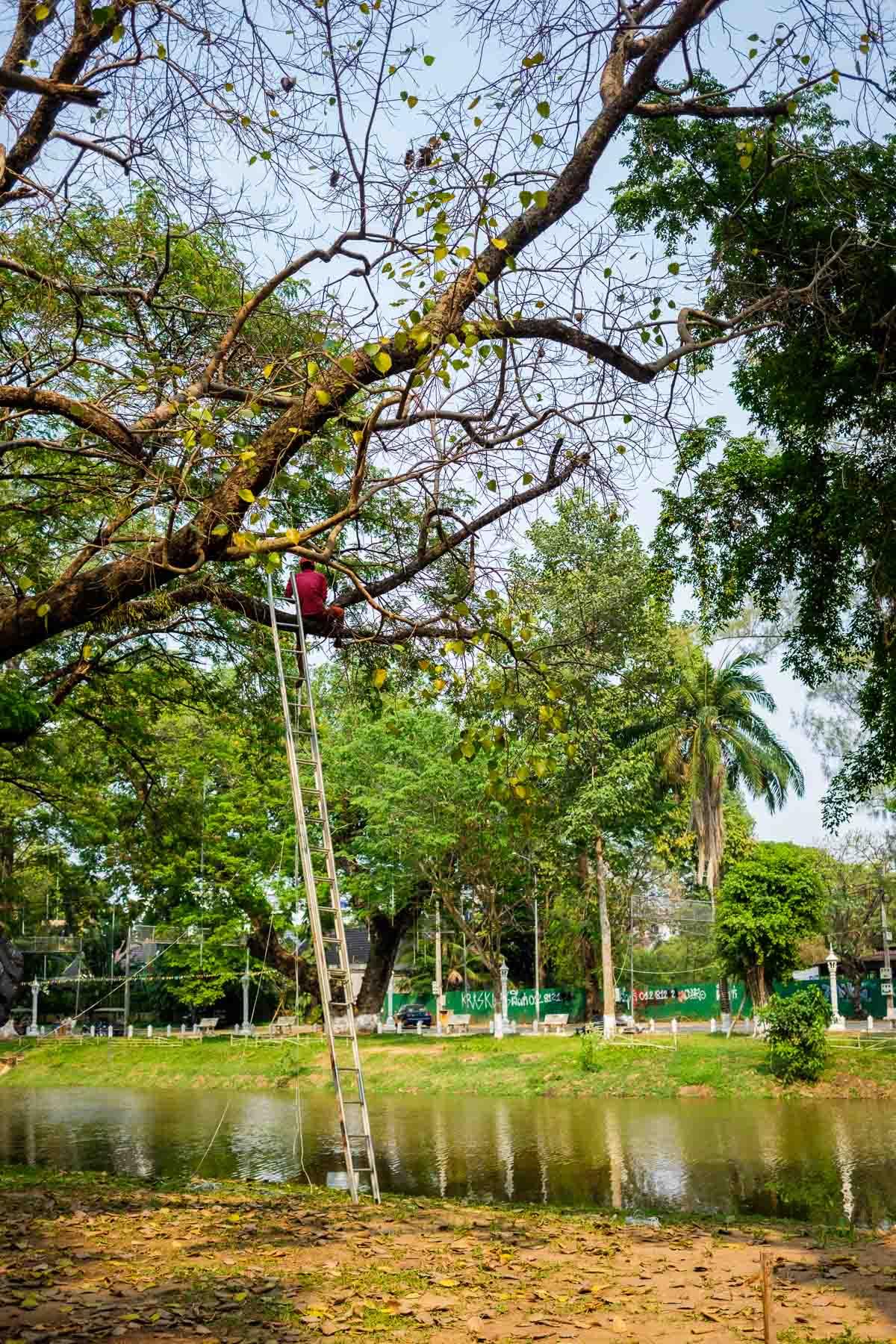 Person on tree in Cambodia