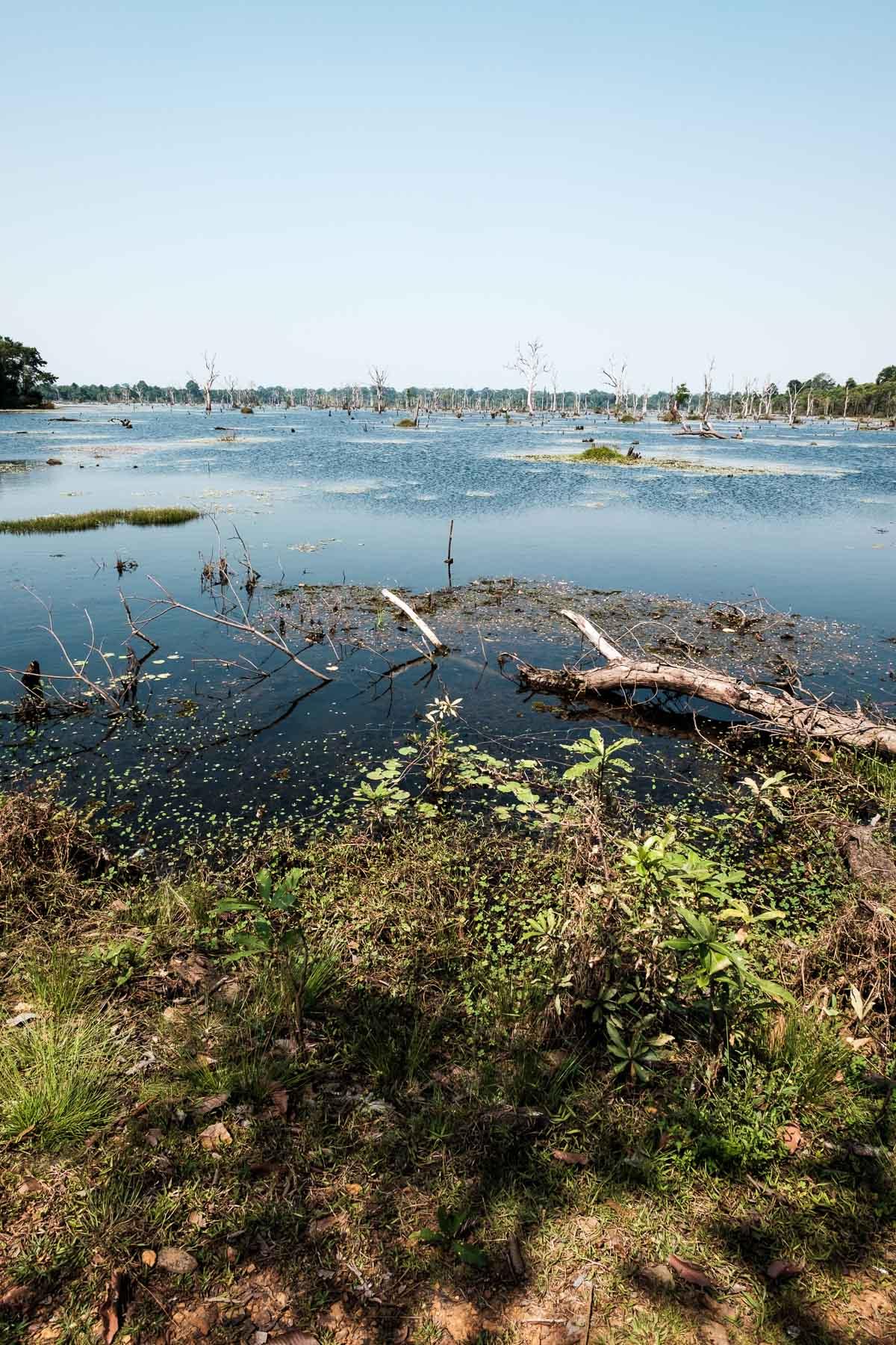 Pond on the way to Neak Pean