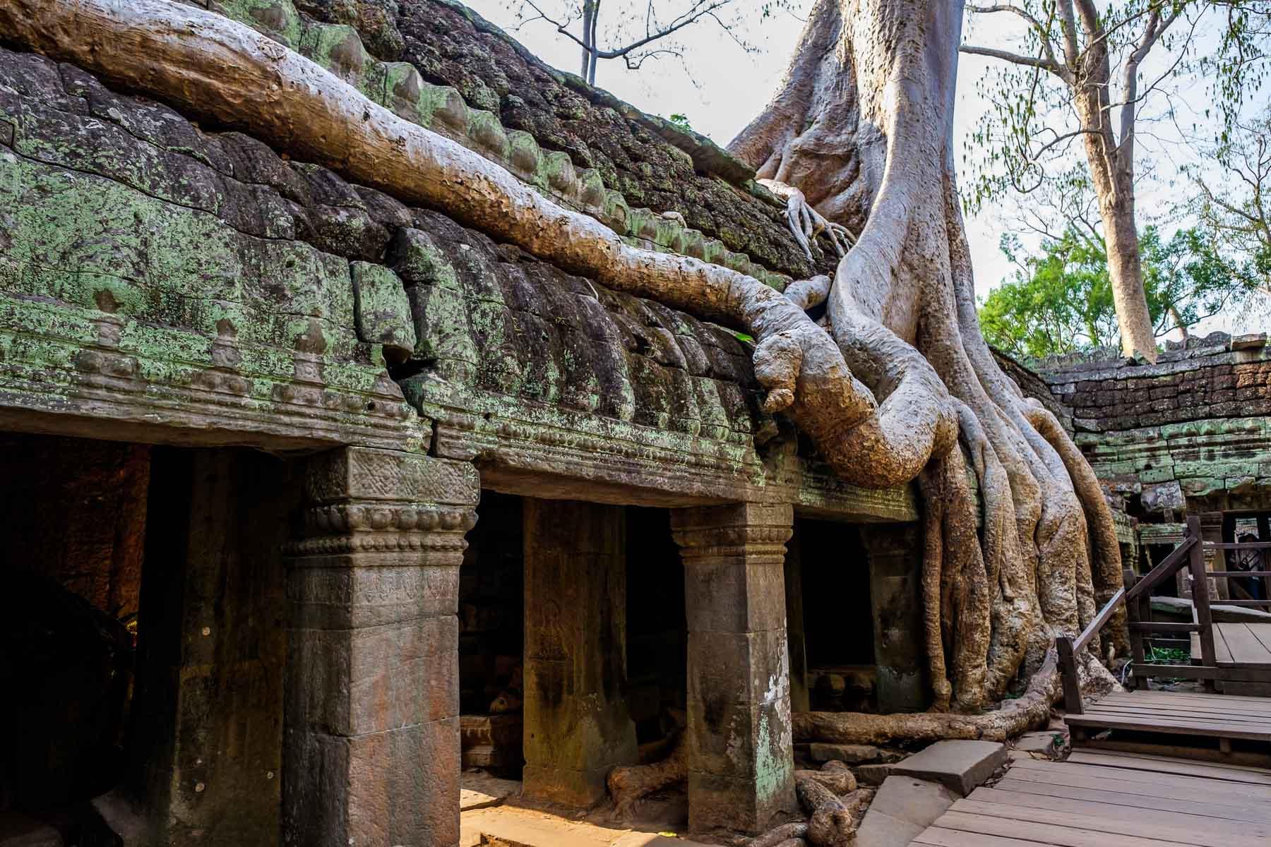 Tree root Ankor Thom