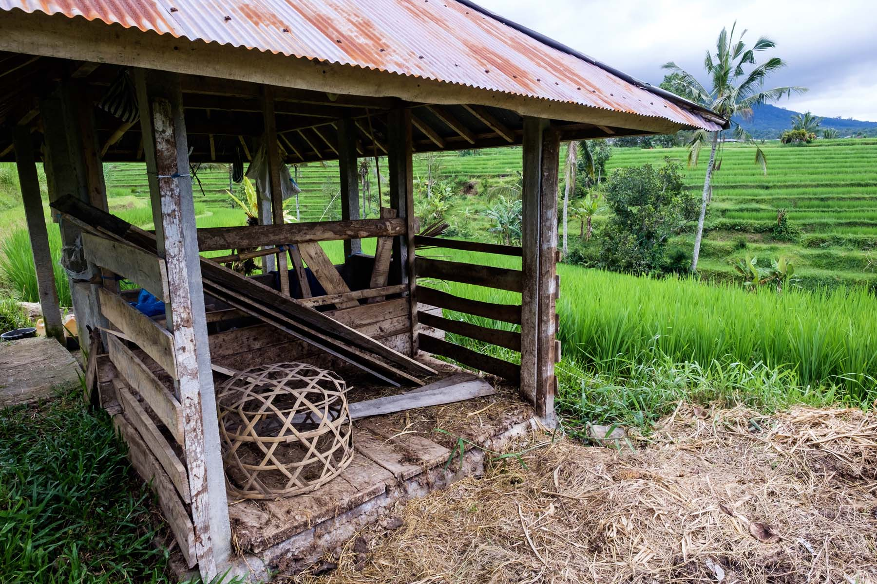wooden hut rice terrace Bali