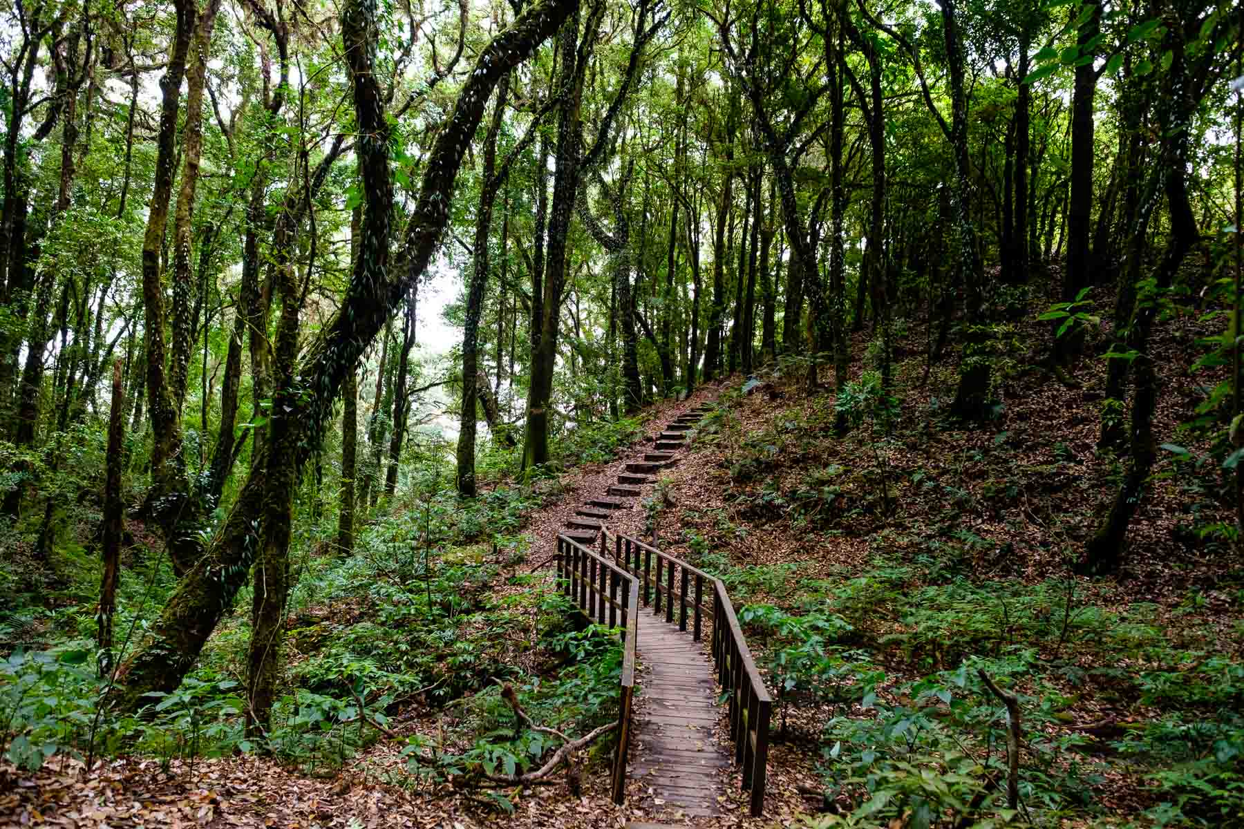 Wooden stairs up through forest