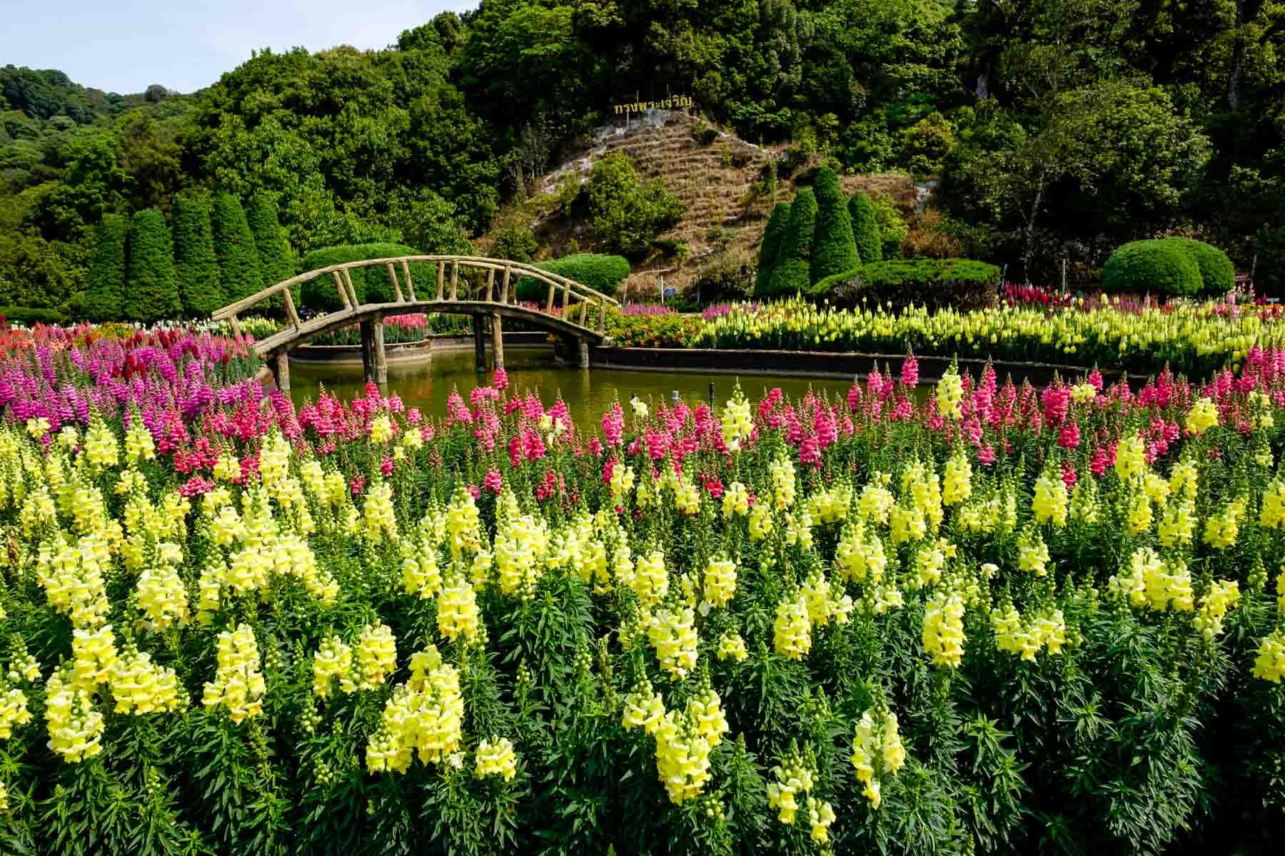 doi inthanon garden