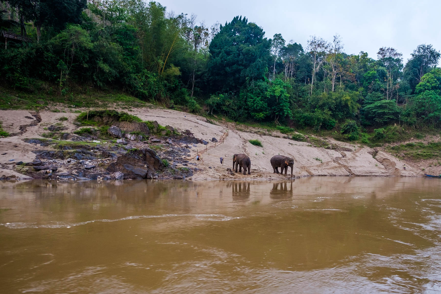 elephants mekong lake laos