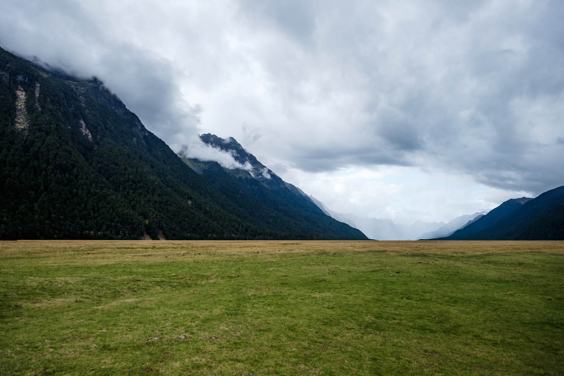 Vast field with mountains Milford Sound New Zealand