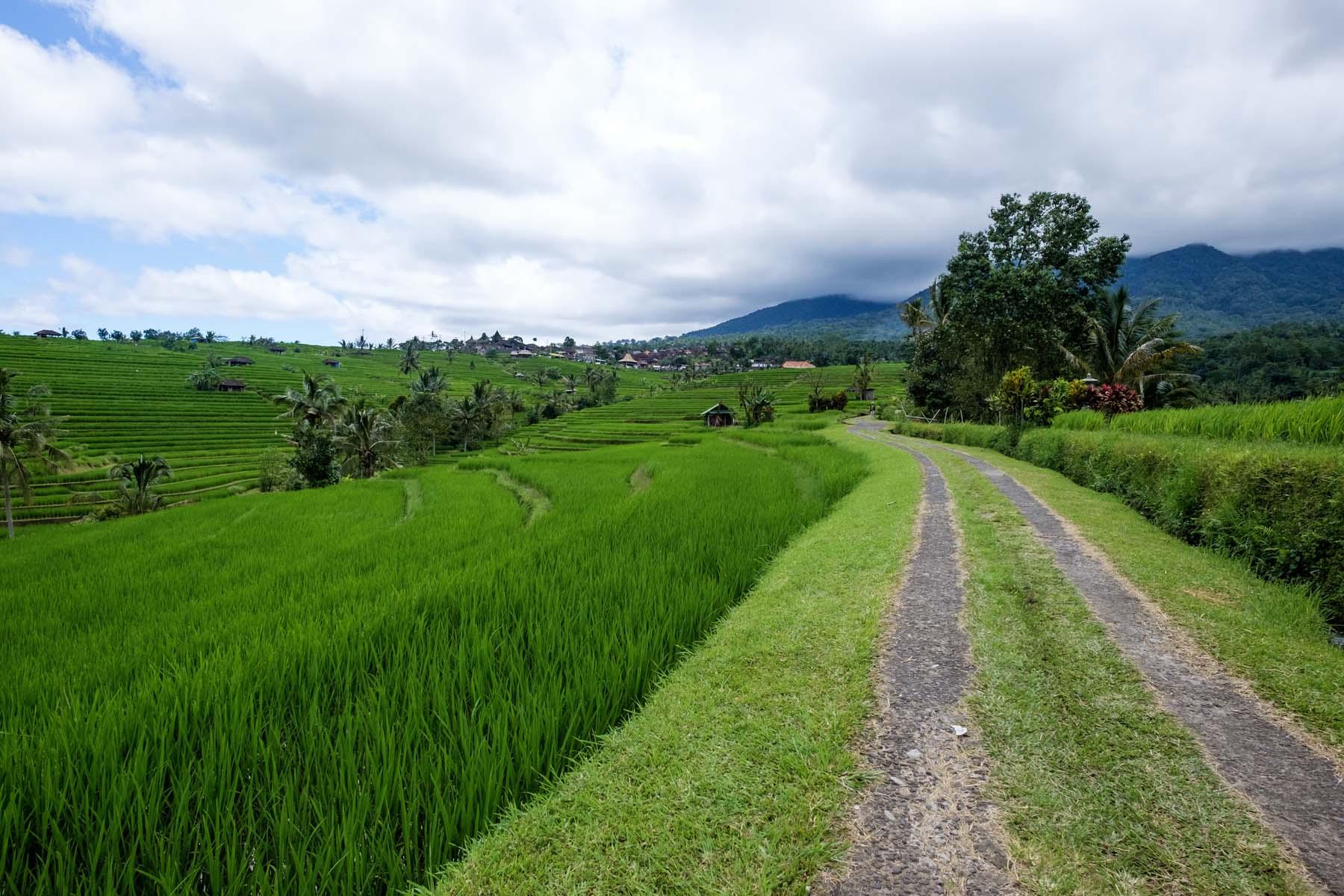 road path rice terrace Bali