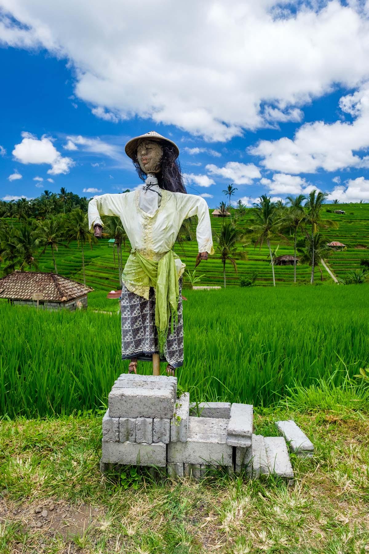 scarecrow jatiluwih Bali indonesia