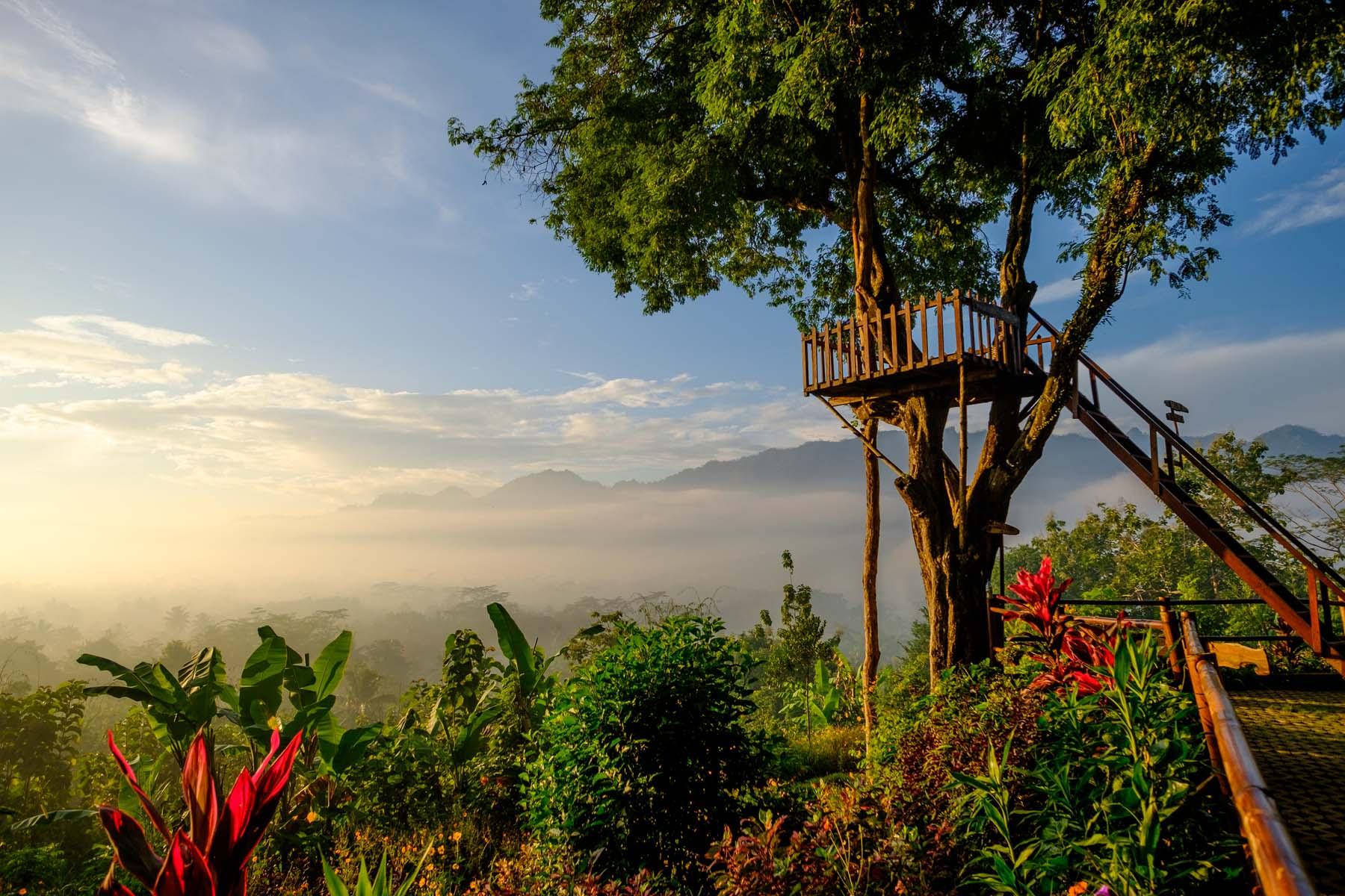 setumbu hill tree house