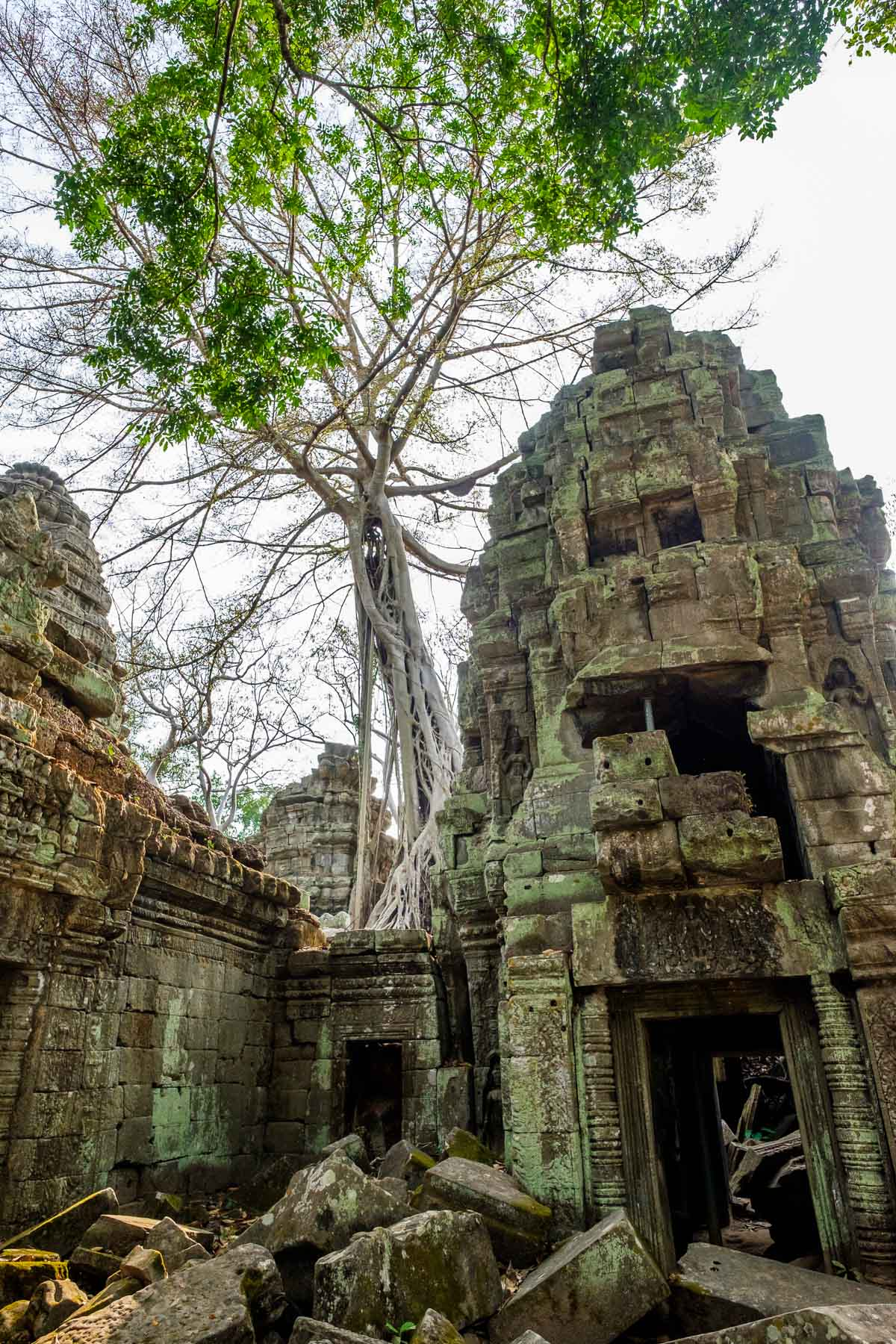 tree and building Angkor thom
