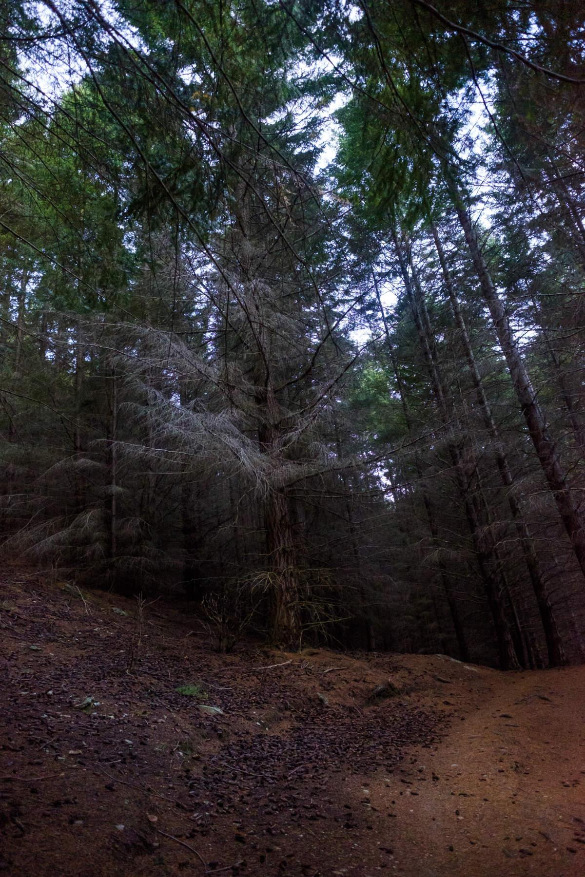 Trees Queenstown hill New Zealand
