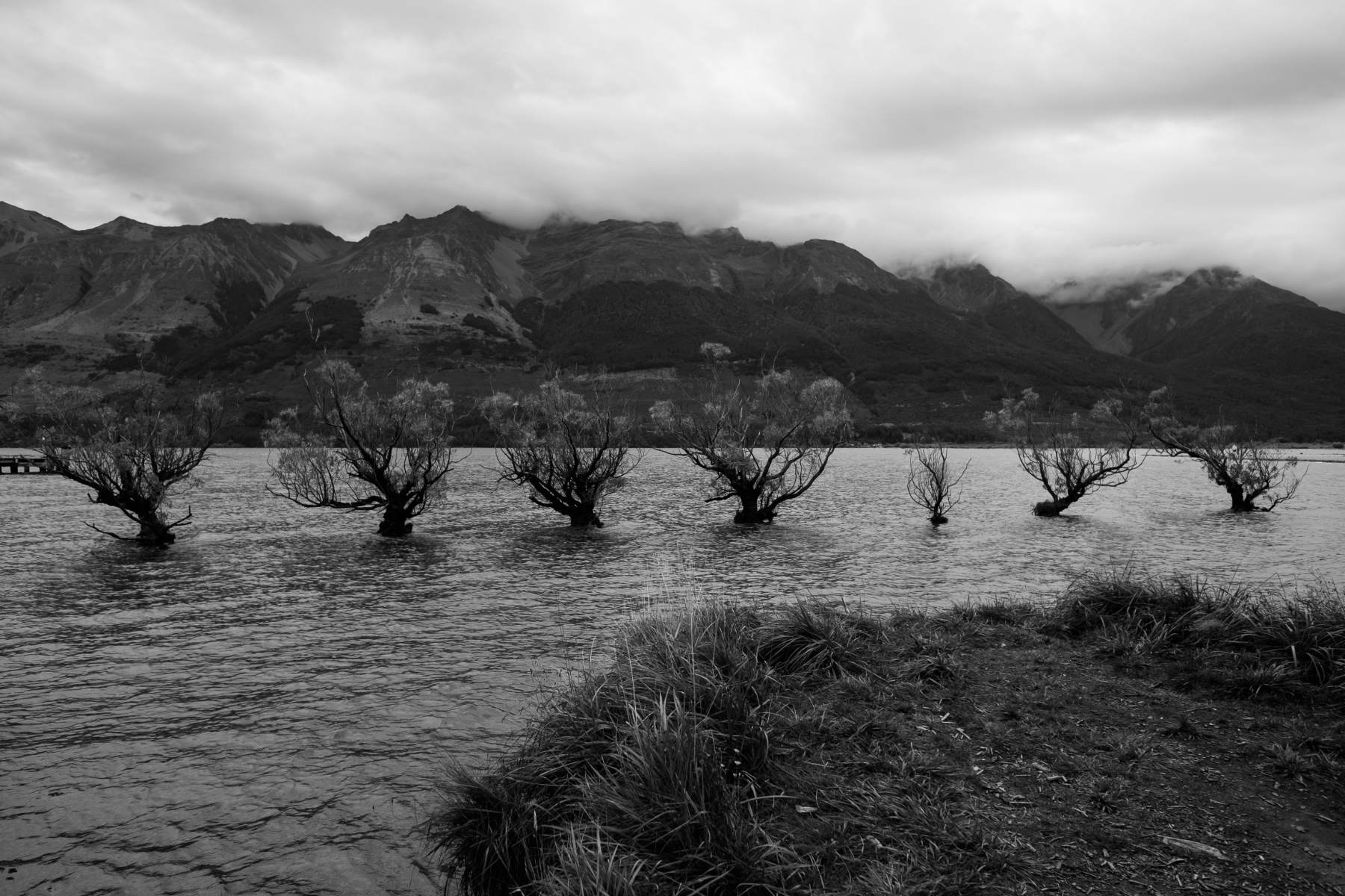 Trees on water glenorchy new zealand