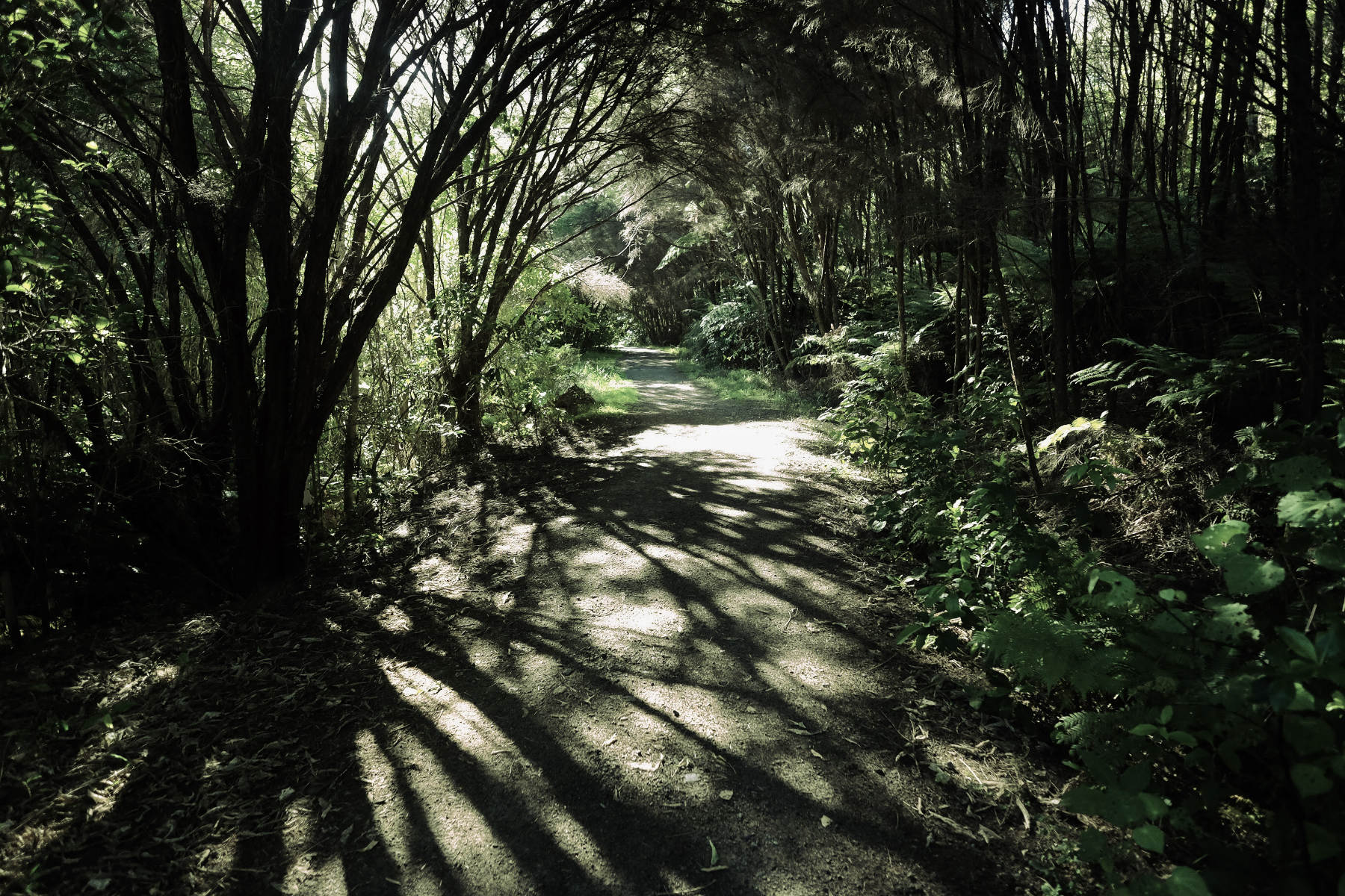 Tree pathway shadow waiheke island New Zealand